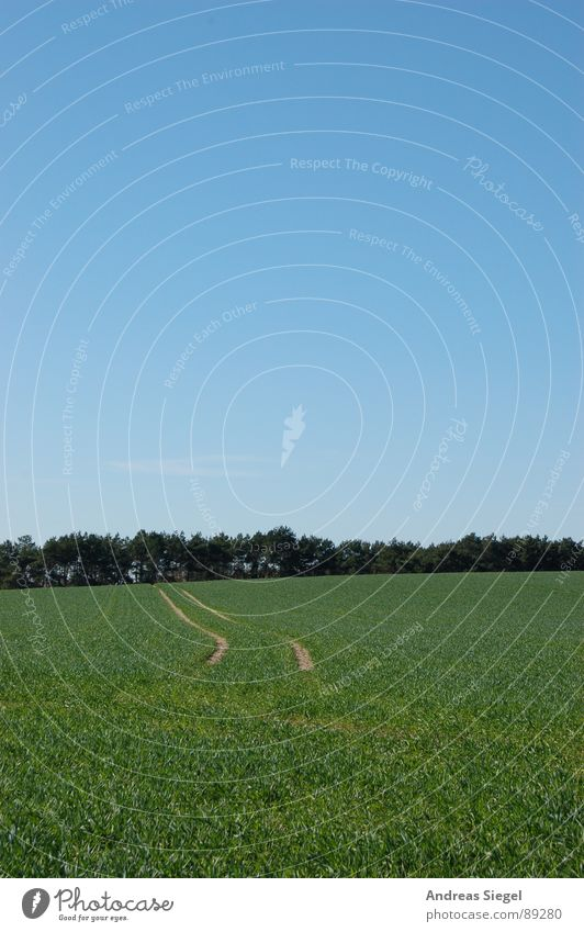 Vom Erdboden verschluckt Himmel blau grün schön Wald Wiese Wege & Pfade Gras Frühling Sand Wetter Feld Ausflug Spaziergang Spuren Schönes Wetter