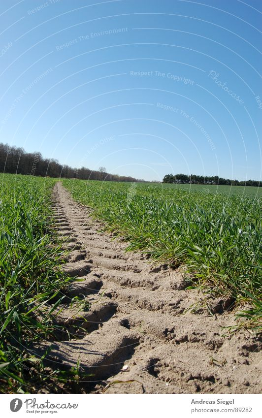 Eindruck hinterlassen Himmel blau grün schön Wiese Gras Frühling Wege & Pfade Sand Wetter Feld Ausflug Spaziergang Schönes Wetter Spuren Fußweg