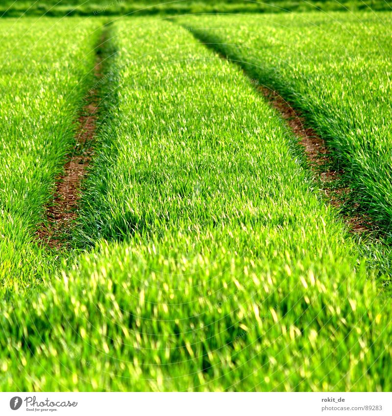 Es grünt so grün! Pflanze Gras Frühling Wege & Pfade Linie Horizont Feld Boden Getreide Furche saftig Aussaat Jungpflanze austreiben