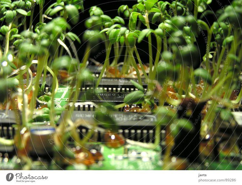 Grün gewinnt Platine grün Elektrisches Gerät Reifezeit ökologisch Erneuerbare Energie Naturwissenschaft Wissenschaften Moral Industrie Computer Pflanze Erfolg