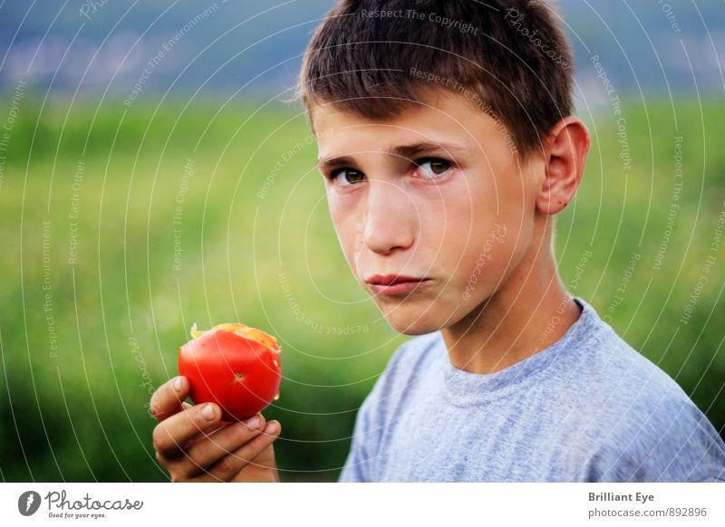 Junge isst frisch gepflückte Tomate Mensch Kind Natur Sommer Frühling Essen maskulin Lifestyle Feld Frucht Kindheit genießen Freundlichkeit Landwirtschaft