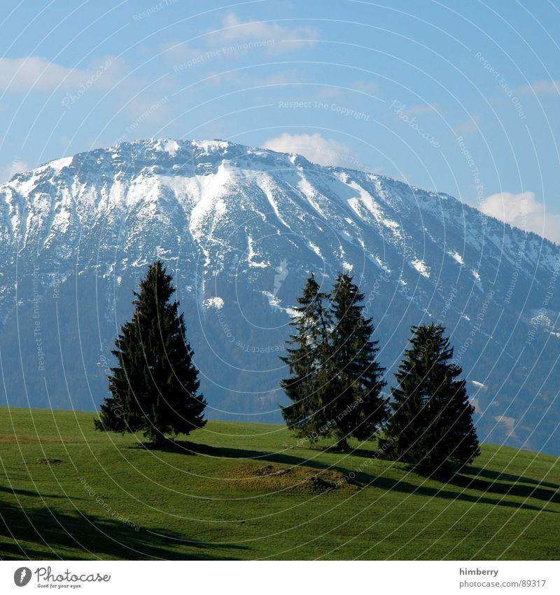 riviera royal VIII Gras Sommer Naturgesetz Wiese grün Umwelt Wolken Wildnis Himmel Grünfläche Baum Allgäu Frühling Berge u. Gebirge Landschaft Pflanze Firmament
