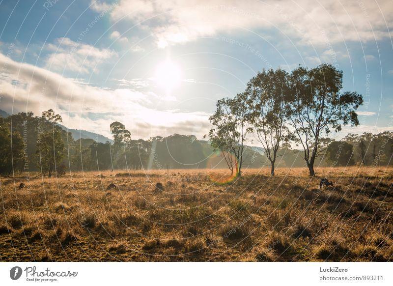 Good Morning Australia Himmel Natur Ferien & Urlaub & Reisen Pflanze Sommer Sonne Baum Landschaft Wolken Tier Ferne Wald Wärme Wiese Gras Frühling