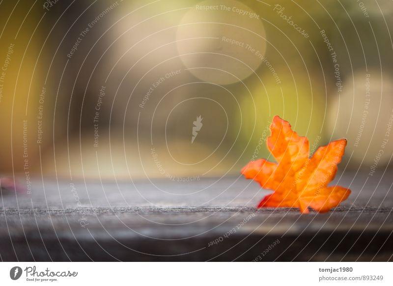 Laub und Holz Natur Pflanze Blatt Herbst Holz Hintergrundbild braun orange Dekoration & Verzierung Herbstlaub herbstlich Herbstfärbung Herbstbeginn rustikal Holzuntergrund