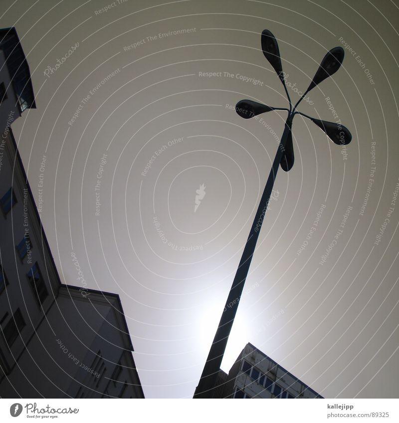 berliner pflanze Fenster Architektur Deutschland Fassade Armut Treppe trist Pfeil Bauernhof Laterne Weltall Aussicht DDR trendy Straßenbeleuchtung