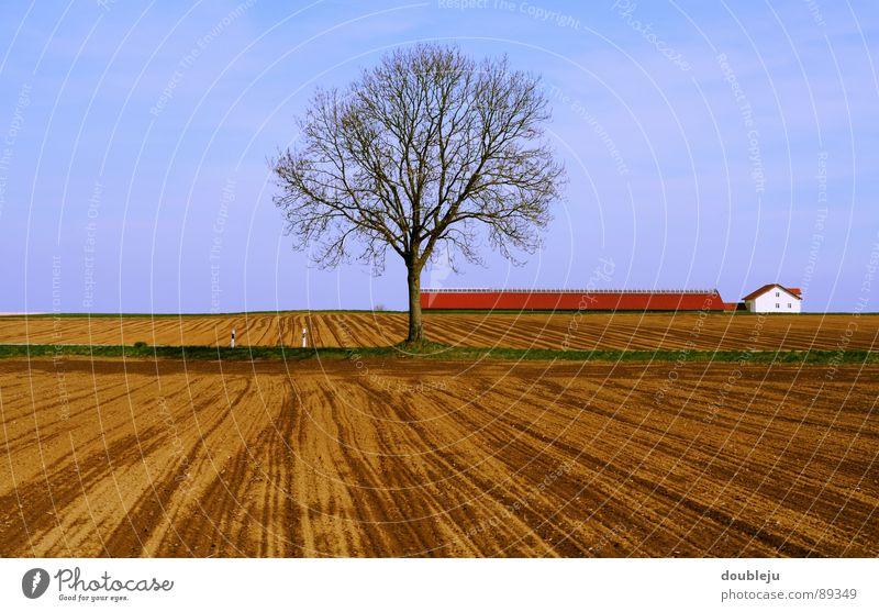 still und stumm Baum Feld Haus Wolken Holz leer Pflanze Dach Einsamkeit Menschenleer Himmel hell Graffiti Straße Ast unbepflanzt angepflanzt Bodenbelag