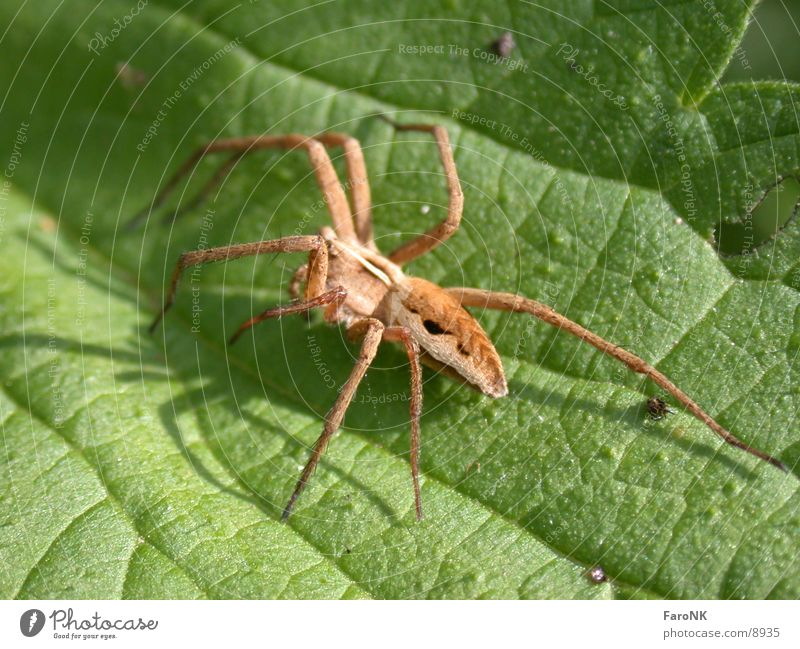 Spinne Natur Tier