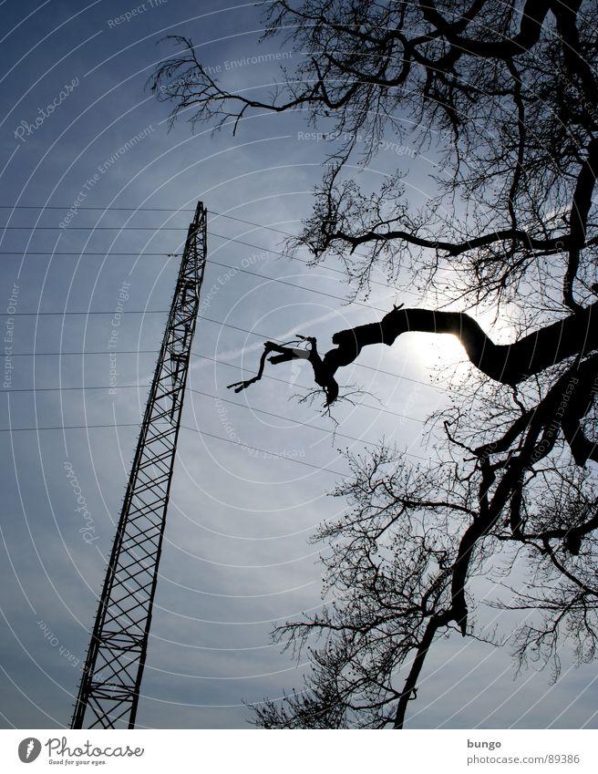 Delightfulness Natur Himmel Baum Pflanze Wolken dunkel Linie Stimmung Metall Wetter hoch Energiewirtschaft Elektrizität Kabel bedrohlich Ast