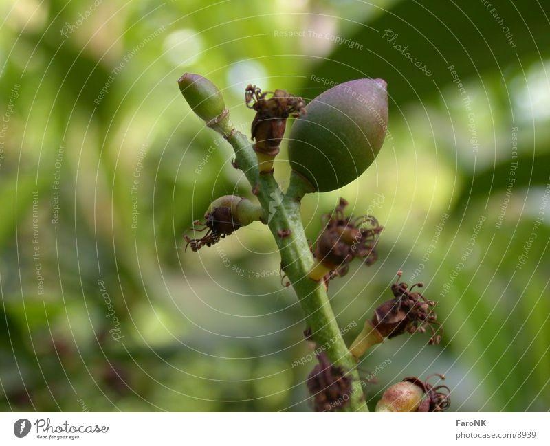 Samen Natur grün Pflanze