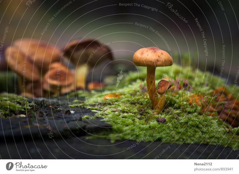 Jo... september Natur Pflanze grün Wald Umwelt Herbst braun Erde Schönes Wetter Spaziergang Moos Pilz feucht Waldrand Feuchtgebiete