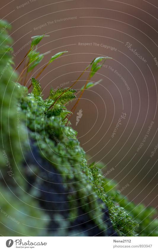 Gruppenfeeling | Moos Natur Pflanze grün Wald Umwelt natürlich klein Garten Park Erde Schönes Wetter Grünpflanze Waldboden Wildpflanze Moosteppich