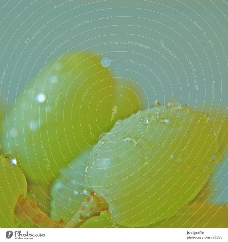 Wein Lebensmittel Gesundheit Vitamin Weintrauben Wassertropfen nass grün süß lecker saftig frisch Frucht Vegetarische Ernährung kernlos Erfrischung