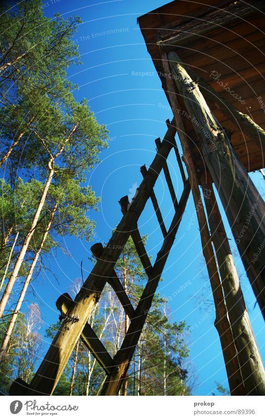 Jobneid Wald Holz Aussicht Hochsitz Baum hoch streben Klettern Sommer sommerlich grün Neid Baumhaus Reh Tier Pflanze Luft Sauerstoff Waldspaziergang Jäger