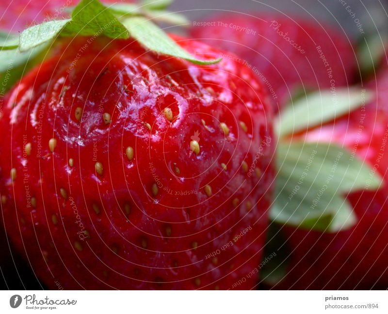 Erdbeerland Ernährung Frucht süß Makroaufnahme Erdbeeren