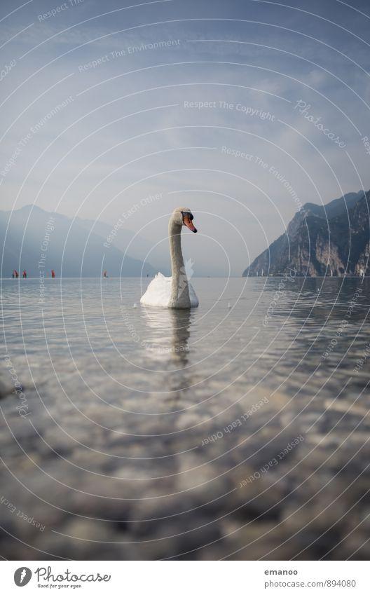 Schwanensee Ferien & Urlaub & Reisen Ausflug Ferne Freiheit Natur Landschaft Tier Wasser Himmel Wolken Klima Wetter See Vogel 1 Schwimmen & Baden blau Liebe