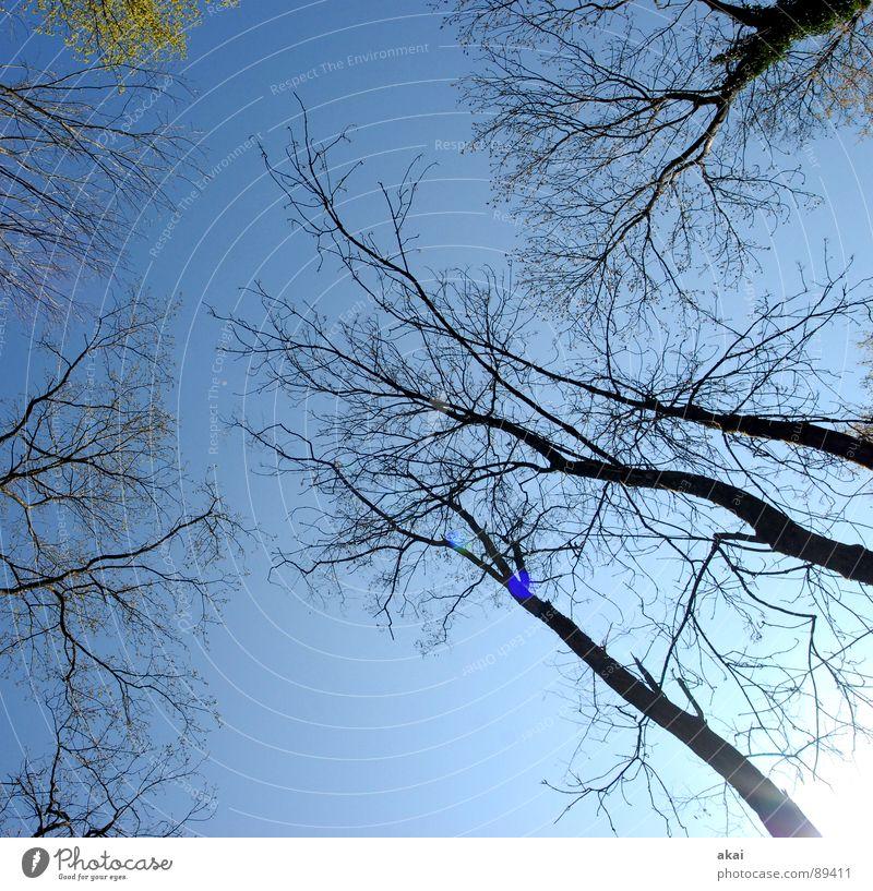 Himmel auf Erden 4 Natur blau grün Baum Pflanze Sommer Blatt Wolken Farbe ruhig Wald Leben oben Linie hoch