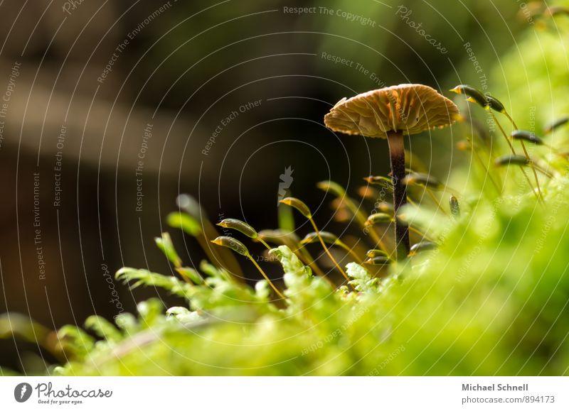 Dem Licht entgegen II. Natur grün Wald Umwelt natürlich braun Wachstum aufwärts Pilz strecken
