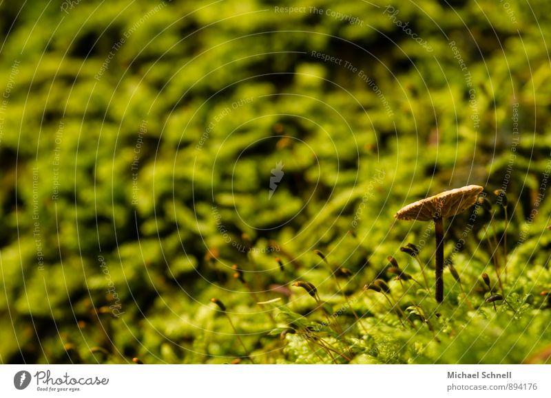 Dem Licht entgegen Natur grün ruhig Wald Umwelt natürlich braun Erde aufwärts Pilz strecken