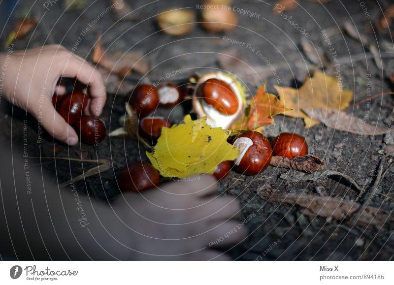 Sammler Mensch Kind Hand Blatt Wald gelb Herbst Spielen Garten braun Park Freizeit & Hobby Kindheit Schönes Wetter Finger Suche