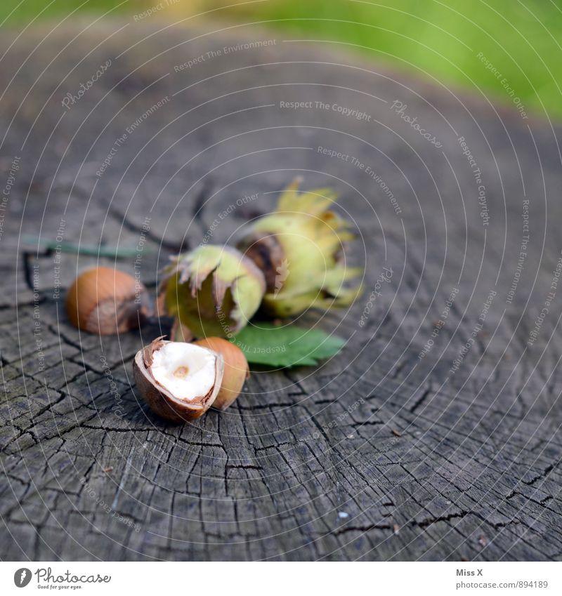 Nuss Lebensmittel Frucht Ernährung Bioprodukte Vegetarische Ernährung Gesunde Ernährung Herbst Blatt Holz lecker braun Haselnuss Haselnusskern Kerne Baumstamm