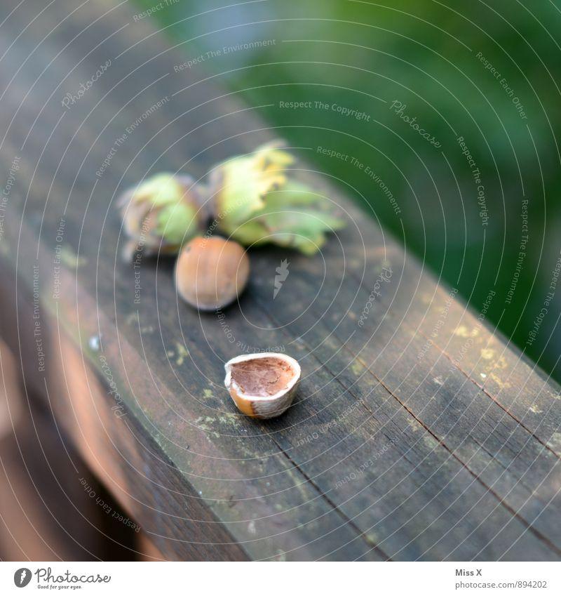 Angefressen II Lebensmittel Frucht Ernährung Essen Garten Herbst Blatt Holz Gesundheit lecker Haselnuss leer aufgegessen Eichhörnchen angefressen Nuss
