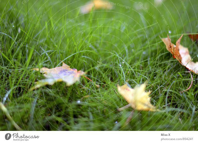 Herbstboten Umwelt Natur Wassertropfen Wetter Regen Gras Blatt Wiese kalt nass Herbstwetter Herbstlaub Herbstbeginn Tau Farbfoto mehrfarbig Außenaufnahme