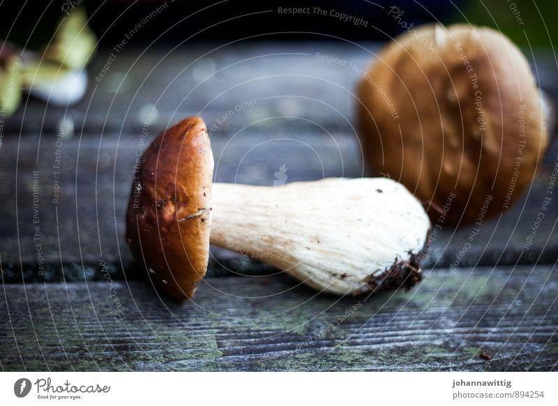 karljohan Natur Herbst Wald dreckig lecker saftig wild braun weiß Steinpilze Holztisch holzig finden Suche Sammlung Gesunde Ernährung Rohkost Schweden Mahlzeit