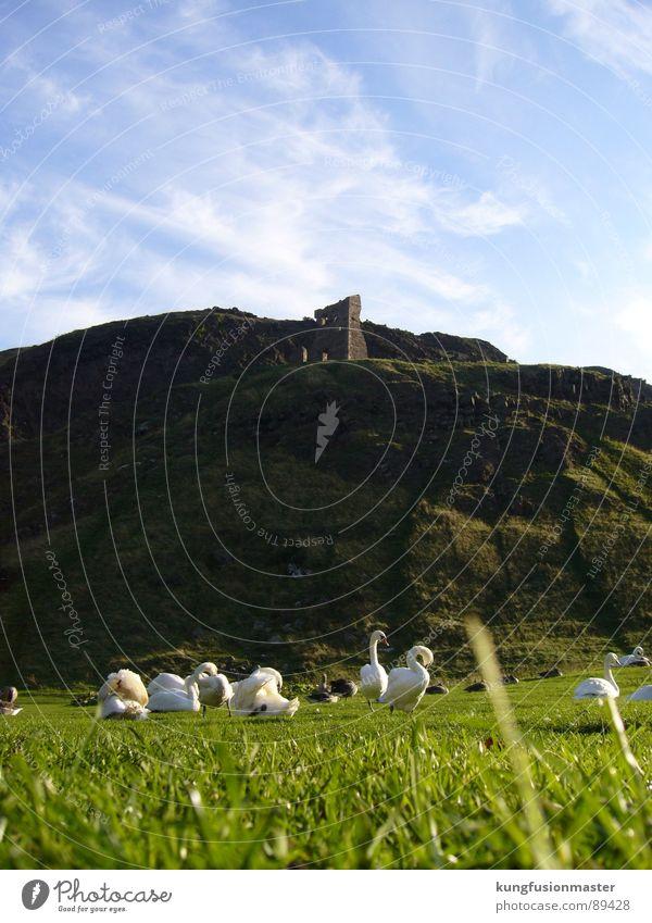 Schwanensee für arme - Gänseberg grün blau Gras Berge u. Gebirge Frühling Vogel Idylle Ruine Gans