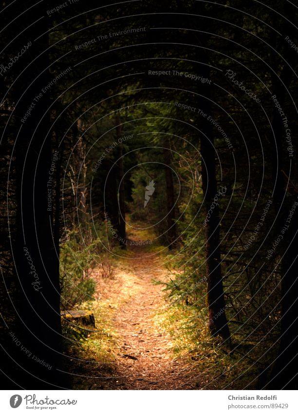 Der Weg - wo führt er dich hin? Wald dunkel Licht Lebenslauf Spazierweg Baum Wildnis Fichte Waldlichtung Zufriedenheit Wege & Pfade Blattadern Natur hell