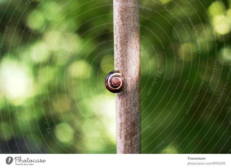 Auslaufmodell | ...eh bald und jetzt noch Höhenkoller. Natur grün Tier Umwelt Herbst Gefühle natürlich Holz Garten braun warten ästhetisch Schönes Wetter