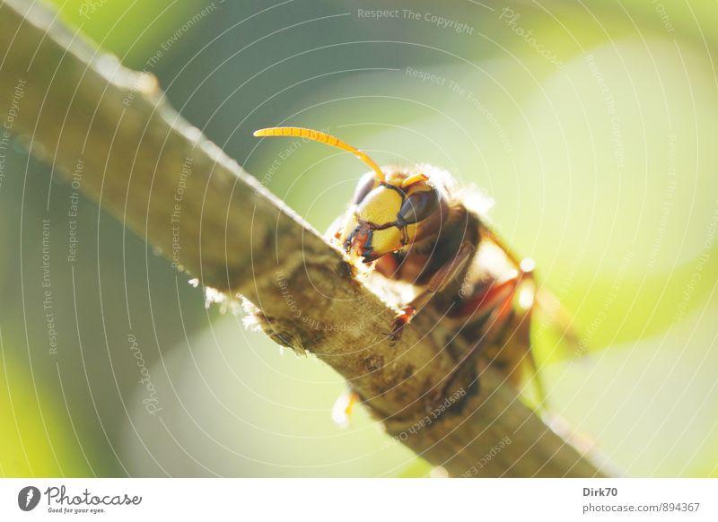 Räuber auf Schonkost Natur Pflanze grün weiß Sommer Tier gelb grau Essen Garten orange wild Wildtier Sträucher genießen bedrohlich