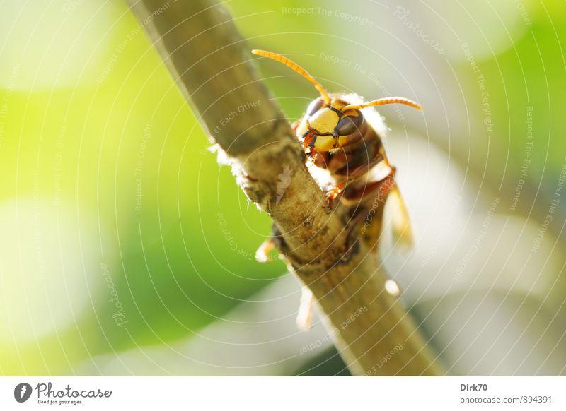 Ritter der Lüfte Natur Pflanze grün weiß Sommer Baum Tier schwarz gelb Garten orange wild Wildtier Sträucher genießen Schönes Wetter