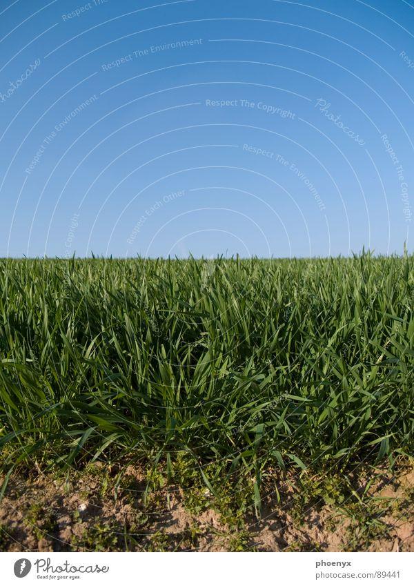 Wo es anfängt ... Gras Wiese grün Neuanfang Verlauf Beginn teilung blau braun ocka Erde Wurzel dreckig Ferne Landschaft freihand