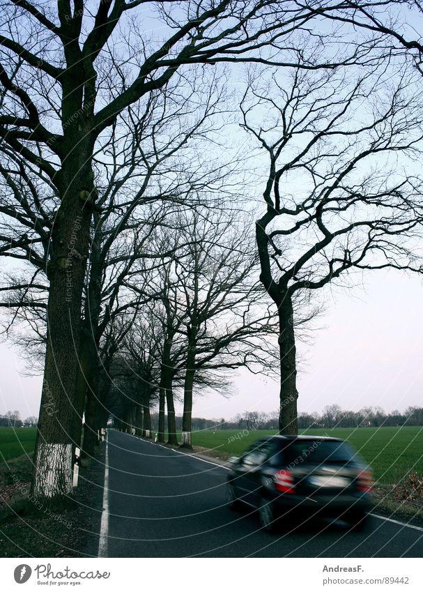 Schönwettersonntagsausflug II Baum PKW Ausflug Verkehr Geschwindigkeit gefährlich Sicherheit bedrohlich Rasen Allee Straßenverkehr Straßenrand Landstraße Schriftstück Verkehrssicherheit