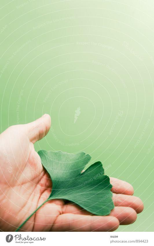 Aus einer Hand schön grün Erholung Hand Blatt ruhig Gesunde Ernährung natürlich Stil Gesundheit Gesundheitswesen Lifestyle Zufriedenheit ästhetisch Finger Lebensfreude