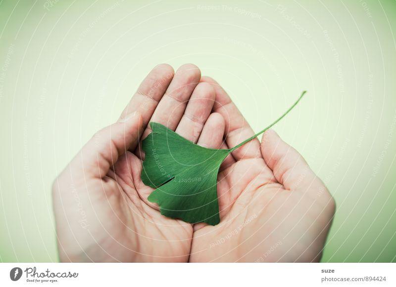 Behutsam grün Erholung Hand Blatt ruhig Gesunde Ernährung Umwelt natürlich Stil Gesundheit Gesundheitswesen Lifestyle Zufriedenheit ästhetisch Finger
