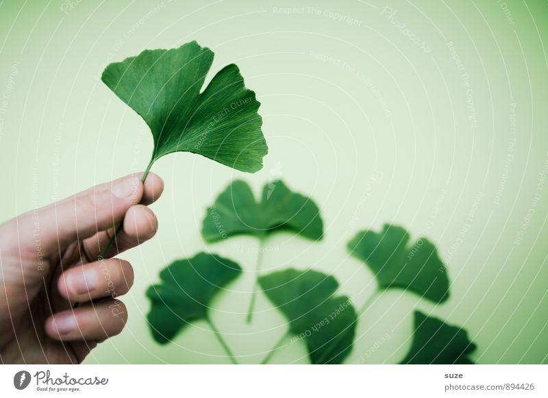 Extra in Grün grün Erholung Hand Blatt ruhig Gesunde Ernährung Umwelt natürlich Stil Gesundheit Gesundheitswesen Lifestyle Zufriedenheit ästhetisch Finger
