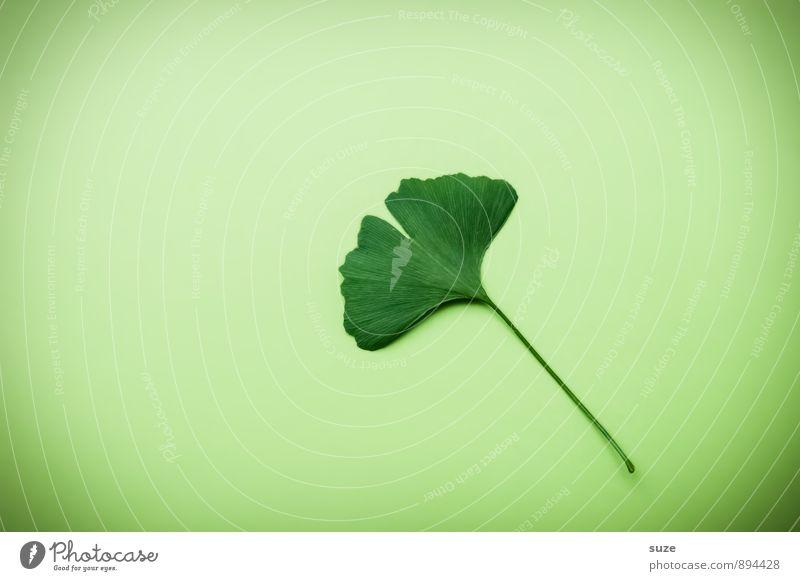 !Trash! Hintergrund neutral schön grün Erholung Blatt ruhig Gesunde Ernährung natürlich Gesundheit Gesundheitswesen Lifestyle Wachstum Zufriedenheit ästhetisch einzeln einfach Lebensfreude