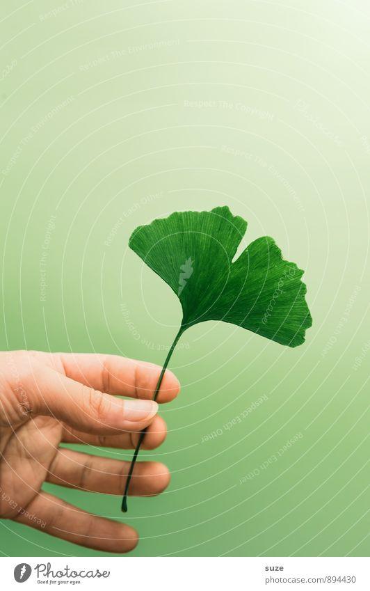 Anspruchslos grün Erholung Hand ruhig Blatt Umwelt Gesunde Ernährung natürlich Stil Gesundheit Gesundheitswesen Lifestyle Zufriedenheit ästhetisch Finger