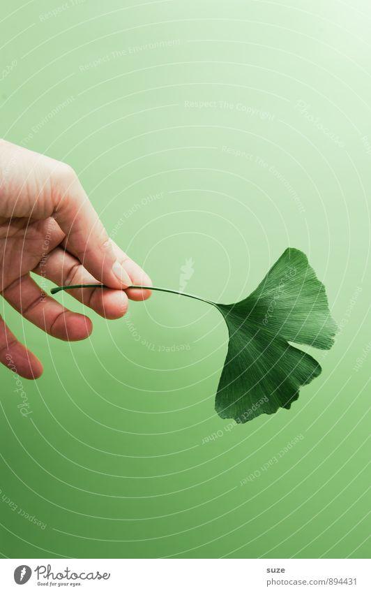 Natürlich   halt schön grün Erholung Hand Blatt ruhig Gesunde Ernährung natürlich Stil Gesundheit Gesundheitswesen Lifestyle Zufriedenheit ästhetisch Lebensfreude Finger