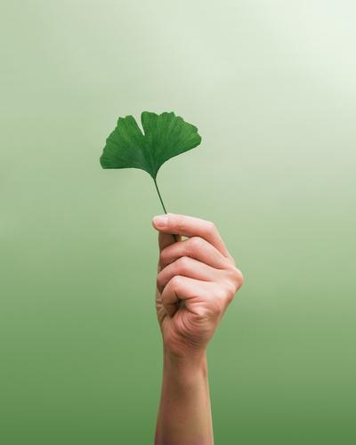Das ist halt so ... grün Erholung Hand Blatt ruhig Gesunde Ernährung Umwelt natürlich Stil Gesundheit Gesundheitswesen Lifestyle Zufriedenheit ästhetisch