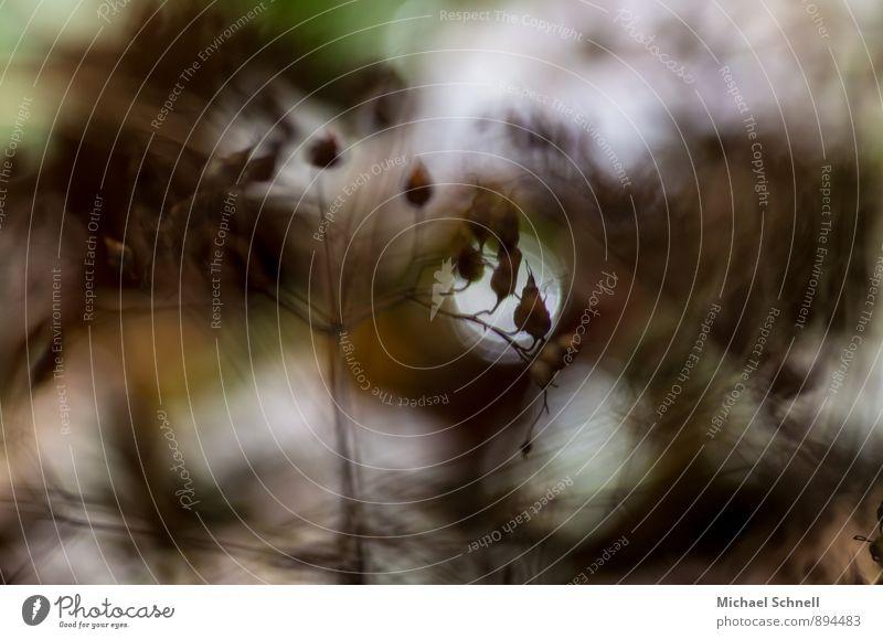 Windig Natur Pflanze Umwelt Bewegung braun wild Sträucher bedrohlich Ende herbstlich Schwäche wackelig