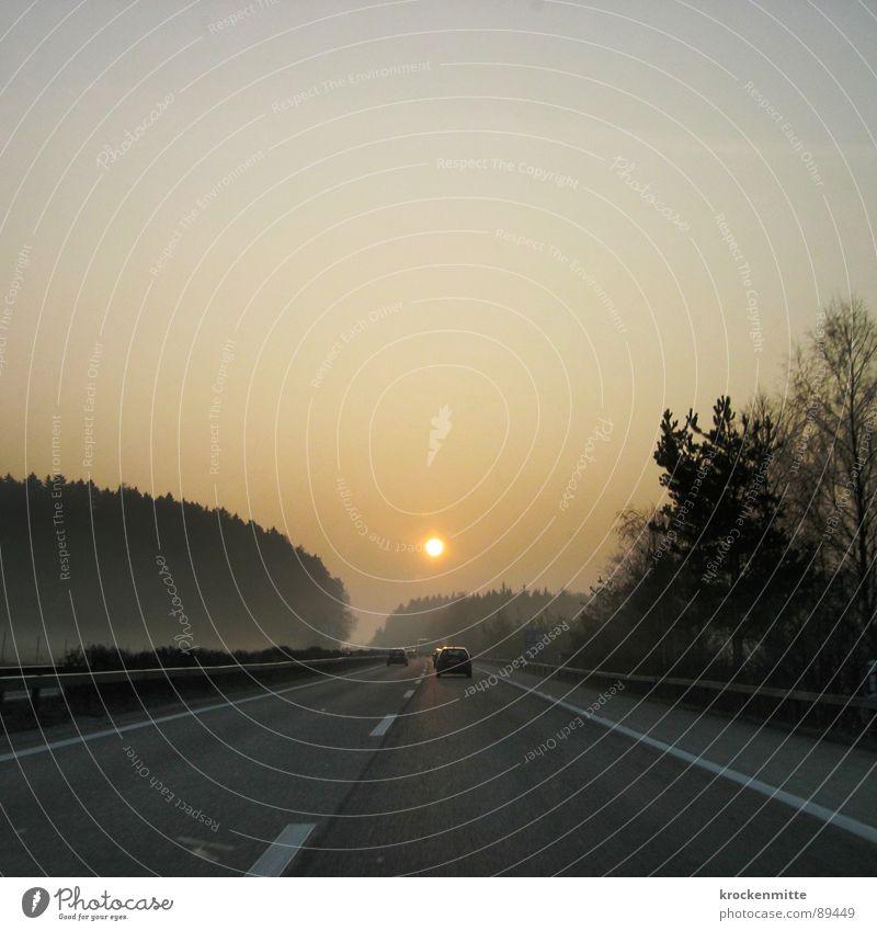 Sonnenaufgang Autobahn Verkehr Baum Morgen fahren Wald Verlauf Schweiz Mittellinie Leitplanke Arbeitsweg Fahrzeug PKW Sonnenstrahlen Geschwindigkeit Physik
