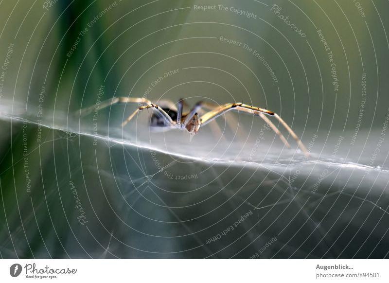 warten... Tier dunkel natürlich Zufriedenheit nah gruselig Spinne Präzision
