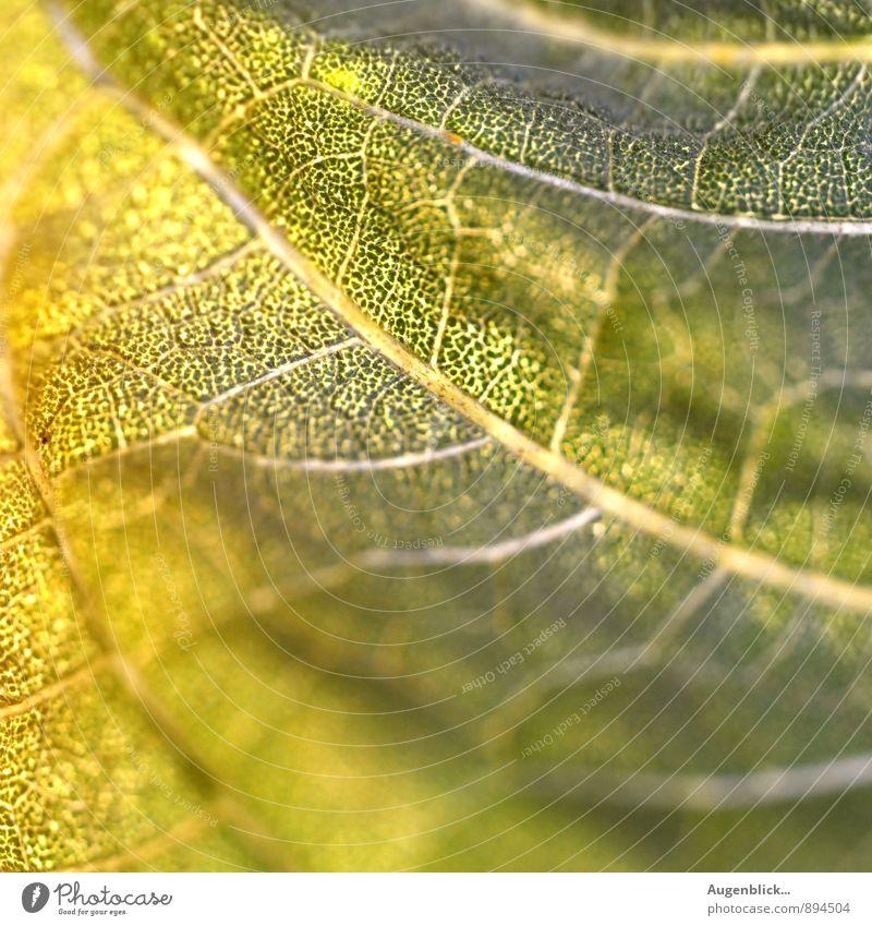 zwischen Sommer & Herbst... Natur schön grün Blatt gelb Wärme Wiese glänzend nah Grünpflanze
