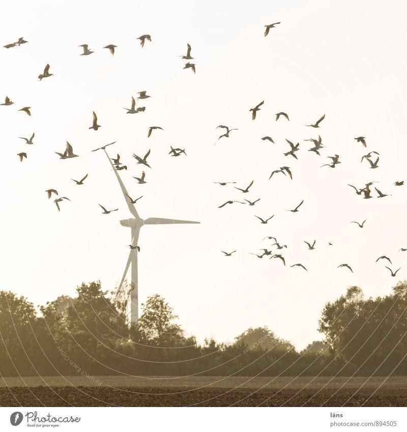 flieg Himmel Baum Bewegung fliegen Vogel Energiewirtschaft Feld Kraft Energie Beginn Windkraftanlage Leichtigkeit Schwarm Windrad Leistung Entschlossenheit