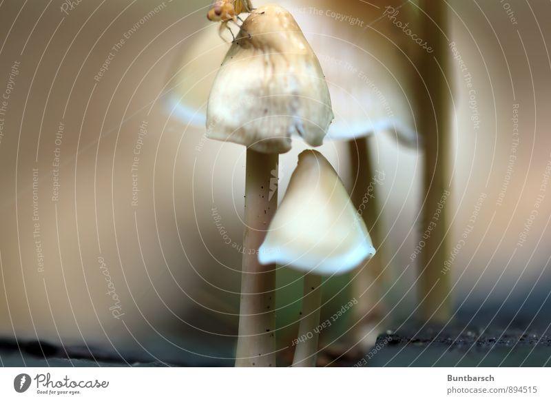 Pilzfamilie Natur Pflanze Tier Wald Umwelt Leben Herbst klein braun Erde Fliege Perspektive dünn Insekt entdecken Pilz
