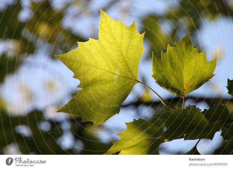 Grünherbst Natur Pflanze grün Sommer Erholung Blatt ruhig Wald Herbst Glück Gesundheit Gesundheitswesen Park Freizeit & Hobby Wind Schönes Wetter