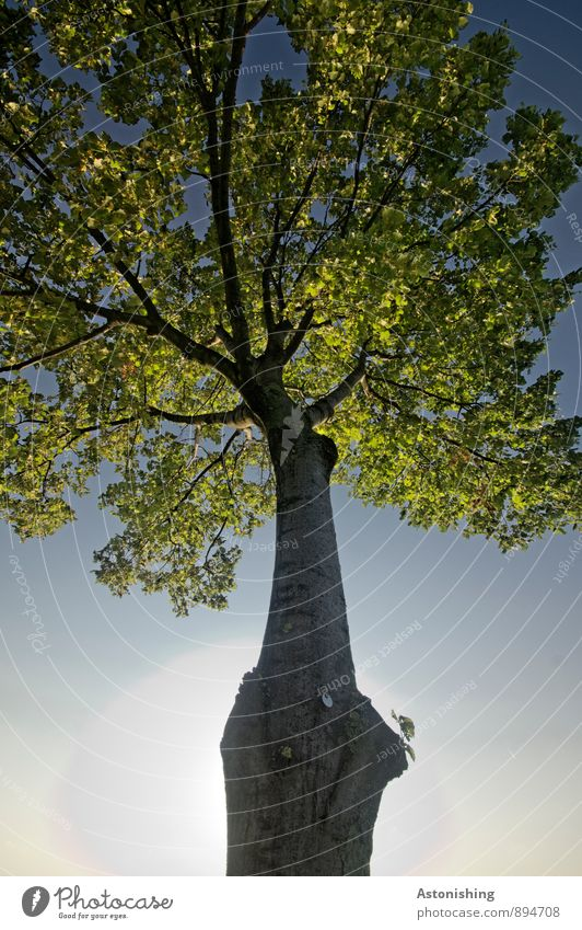 Baum Umwelt Natur Pflanze Luft Himmel Wolkenloser Himmel Sonne Sonnenlicht Sommer Wetter Schönes Wetter Blatt Park Wien stehen blau gelb grün schwarz Laubbaum