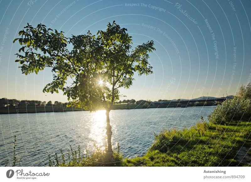 an der Donau Himmel Natur blau Pflanze grün Wasser Sommer Sonne Baum Landschaft Umwelt gelb Gras Küste klein hell